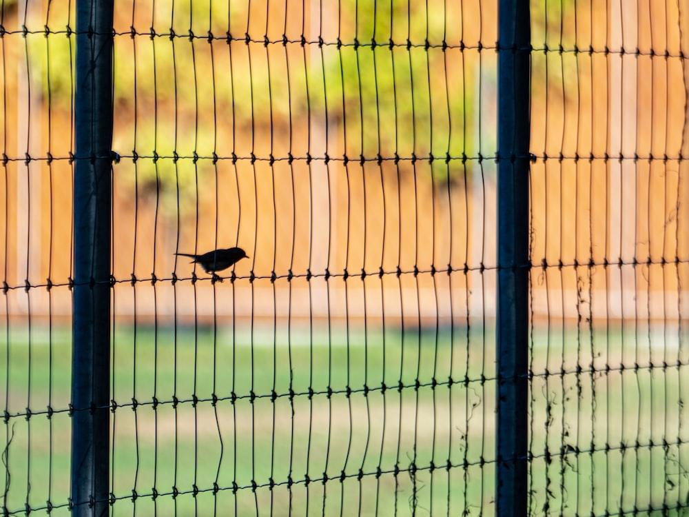 black bird on green fence during daytime