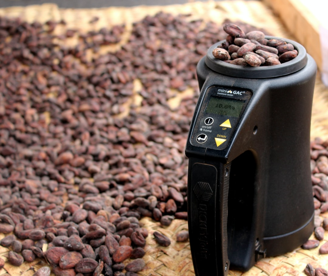 checking moisture in cocoa beans