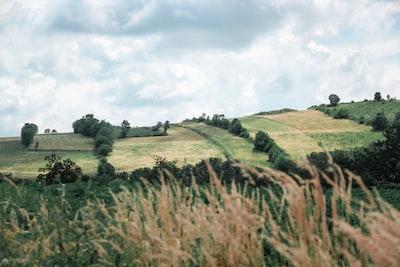 green grass field under white clouds during daytime serbia zoom background
