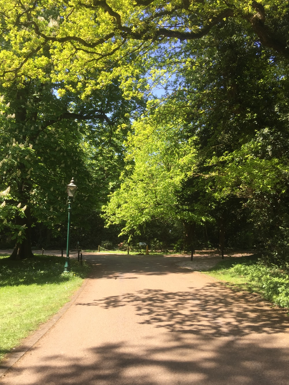 brown concrete pathway between green trees during daytime