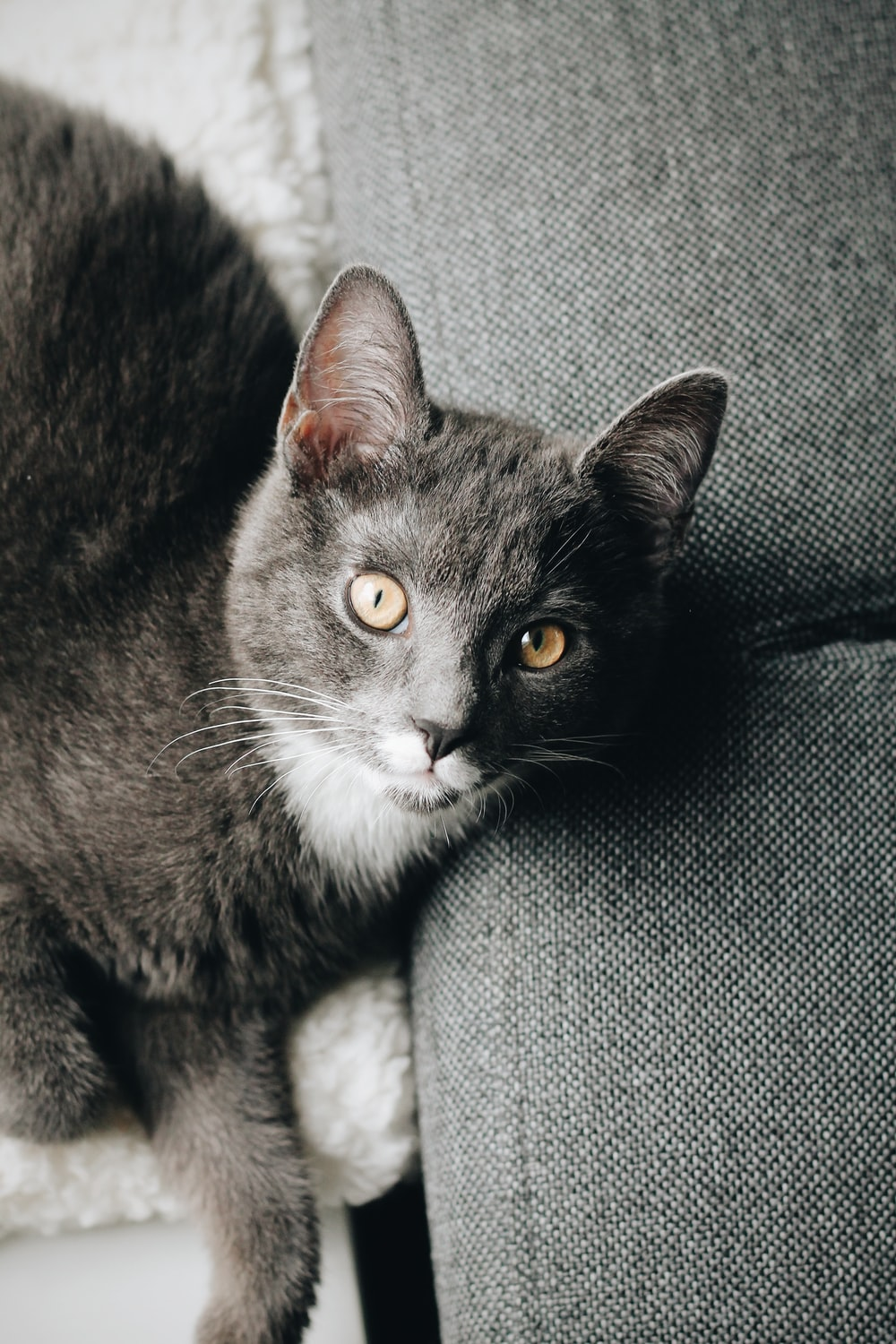 black and white cat on gray textile