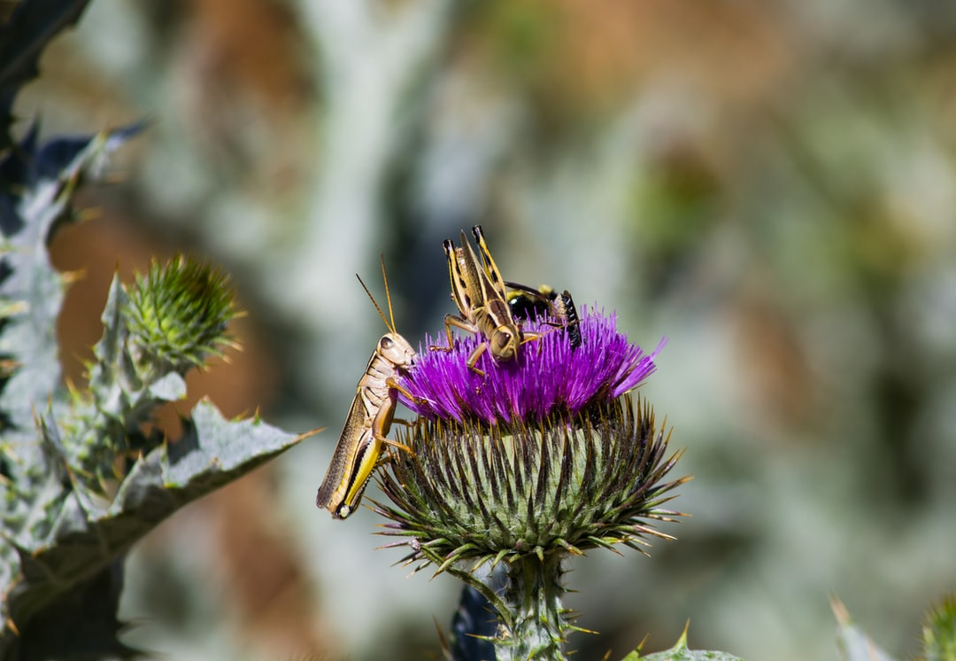 Only a thistle bloom, but everyone wants a piece