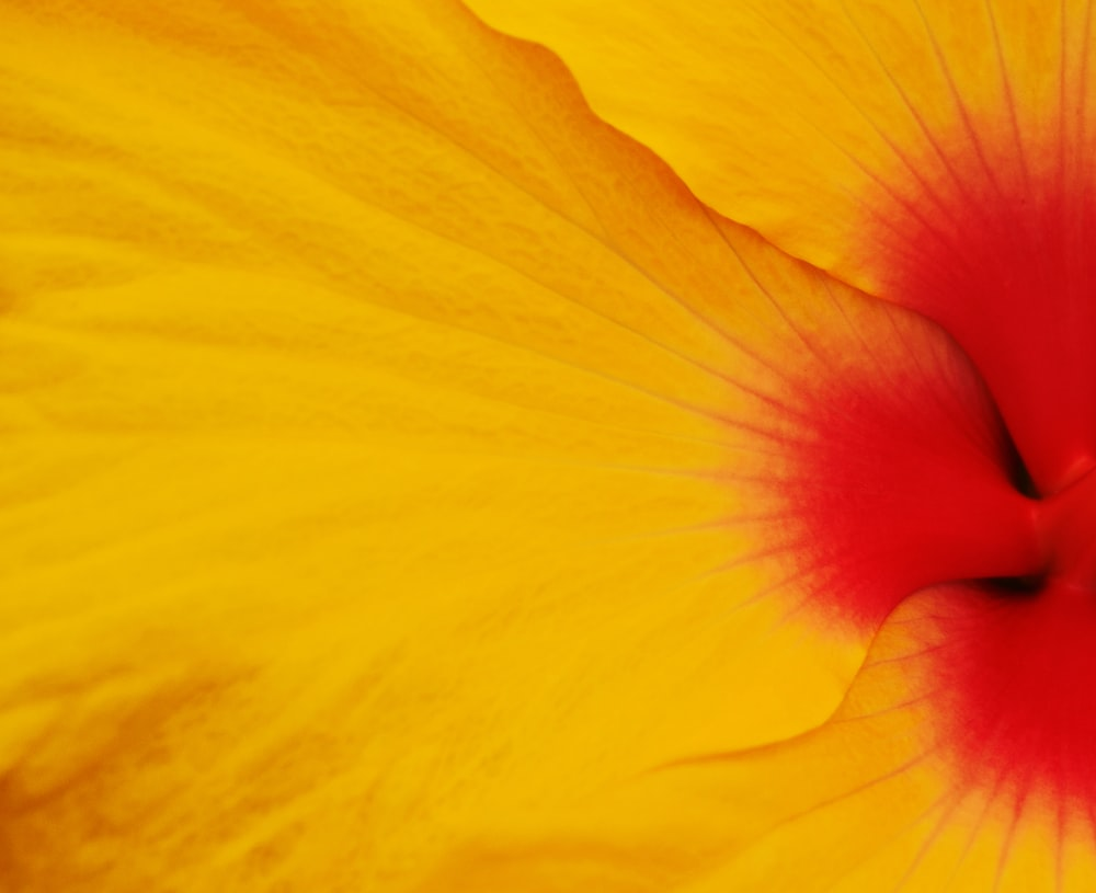 yellow and red flower in close up photography