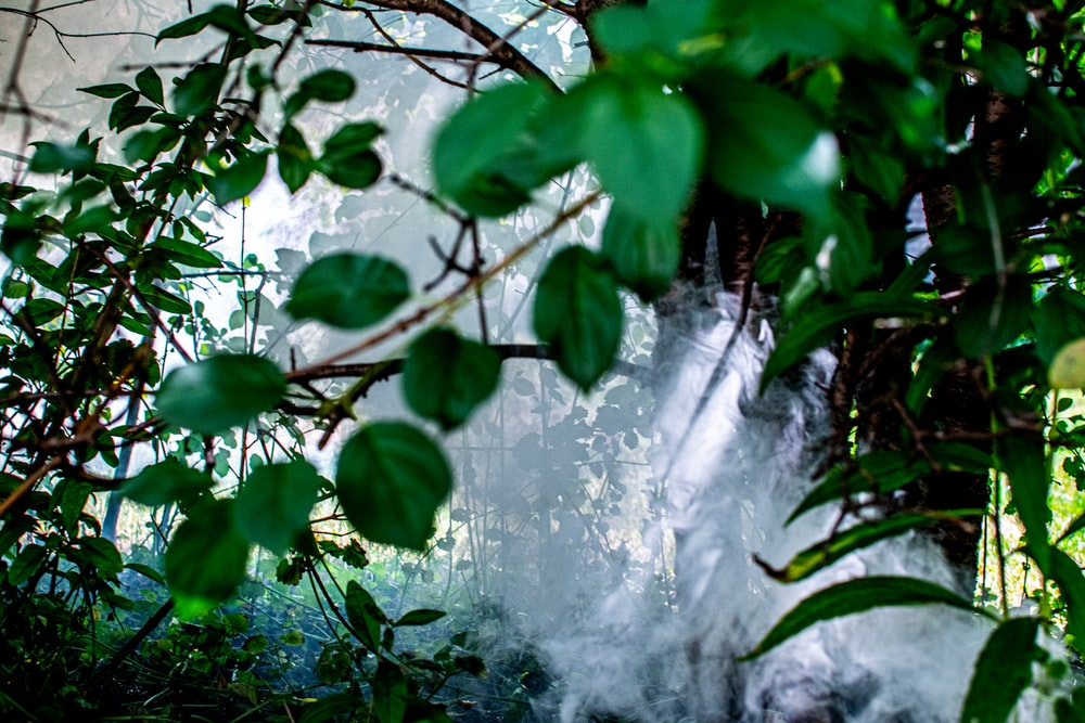 green leaves and water falls