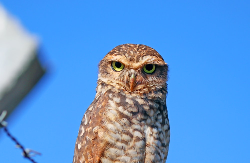 brown owl in blue sky during daytime