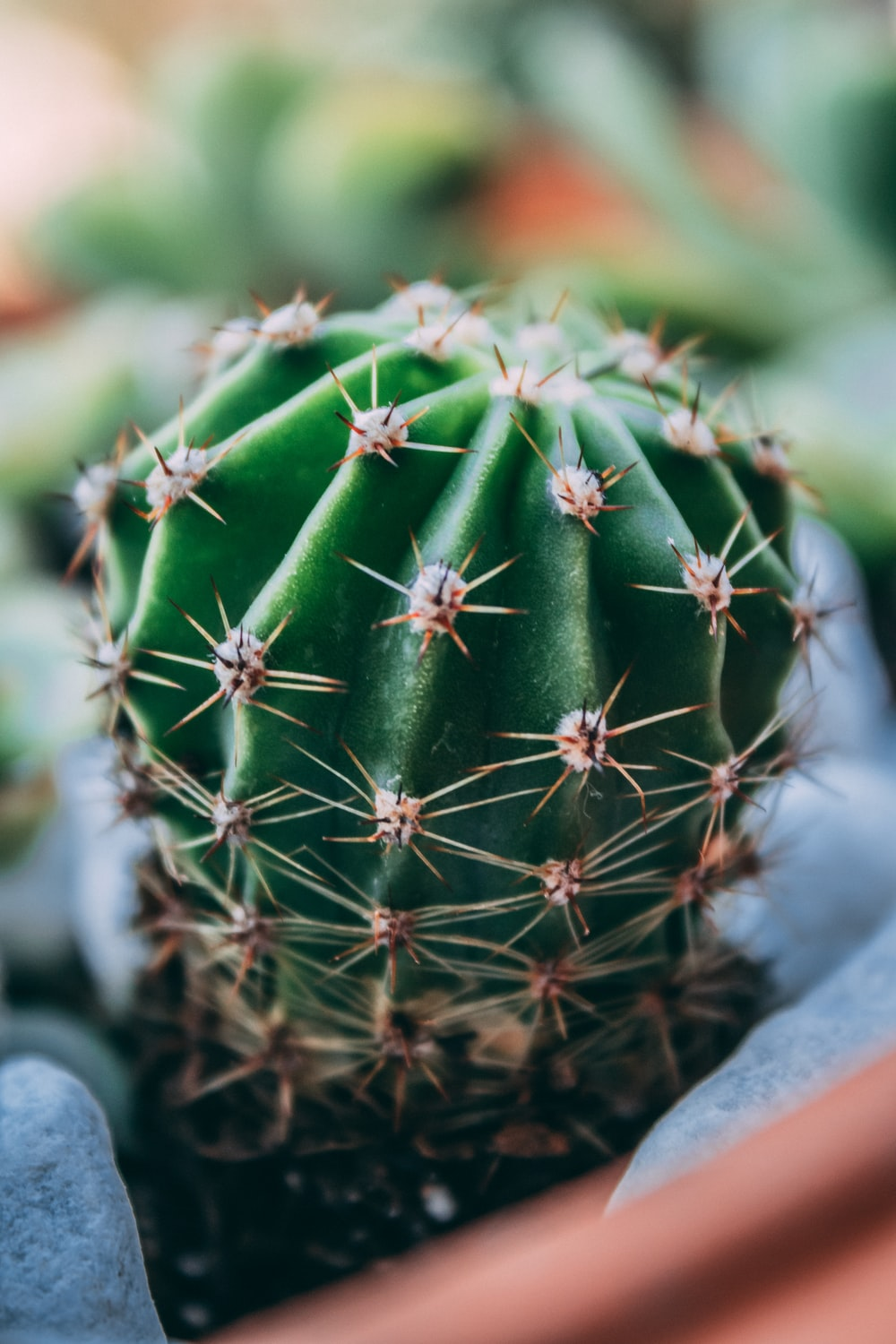 green cactus in close up photography