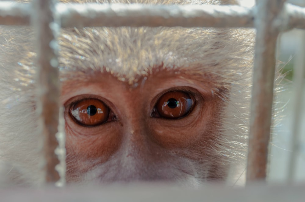 brown and white monkey on white metal cage