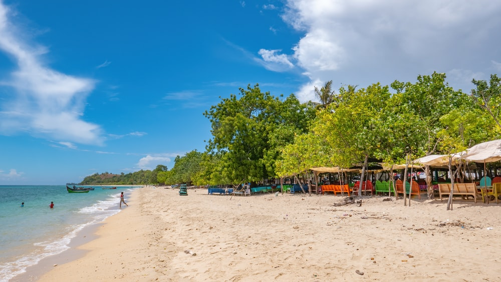 green trees on white sand beach during daytime