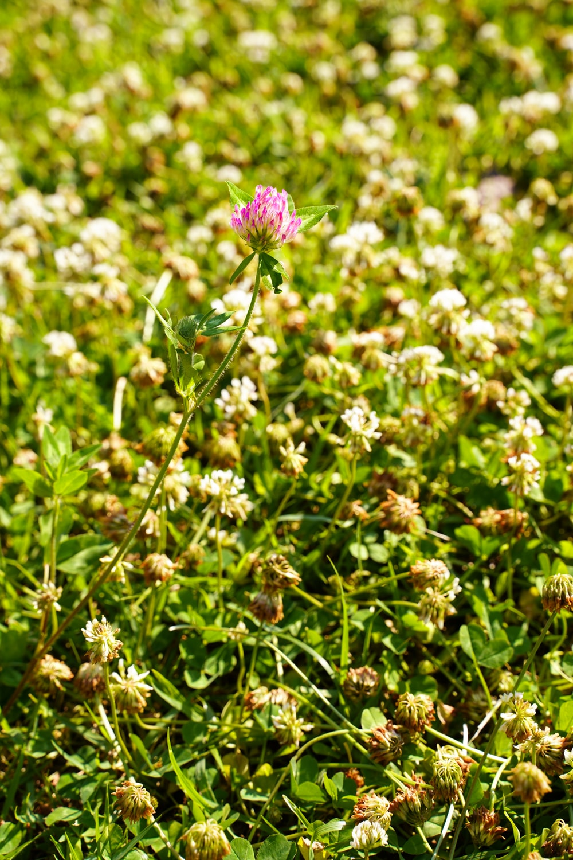 purple flower on green grass during daytime
