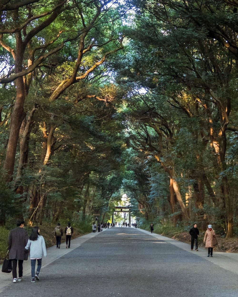 people walking on road between trees during daytime