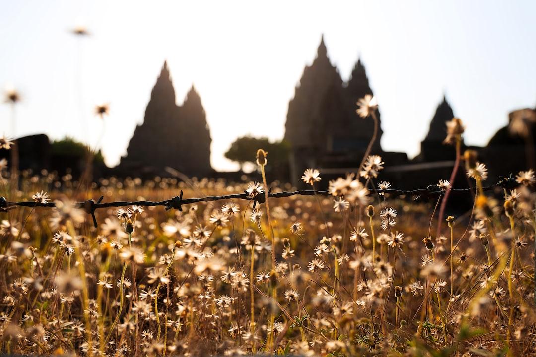 Plants around Prambanan Temple, beautiful weeds!