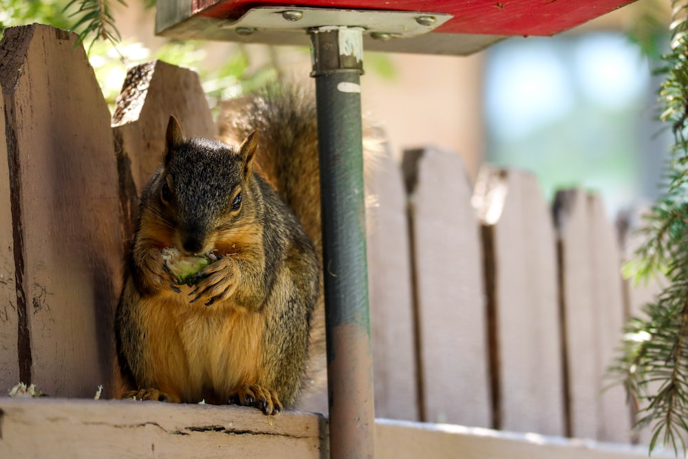 brown squirrel on green wooden post during daytime