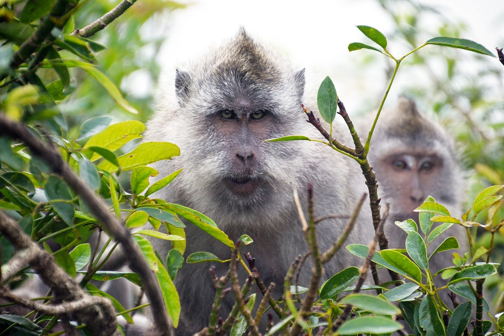white and gray monkey on green tree during daytime