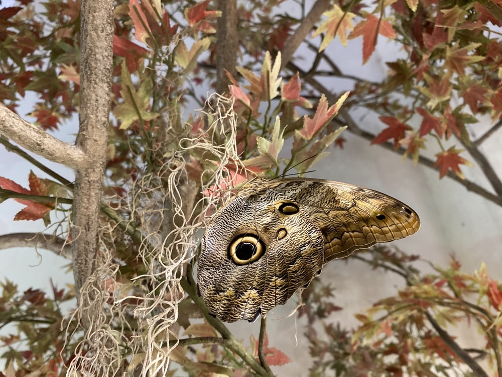 brown and black owl butterfly on brown plant