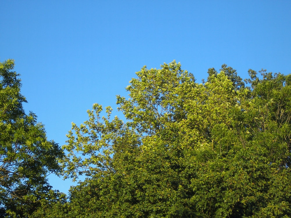 green tree under blue sky during daytime