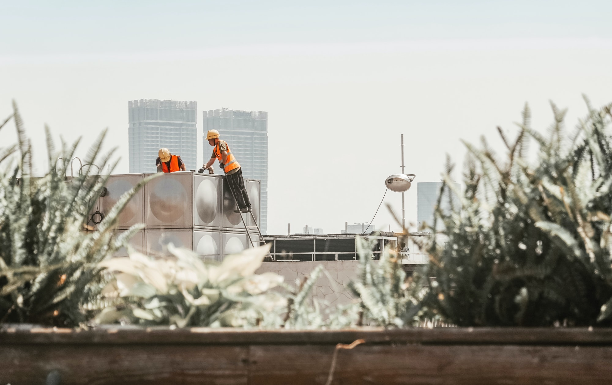 Construction workers on top of a building, with plants in the foreground