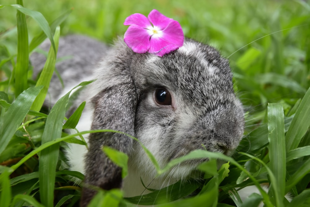 gray and white rabbit on green grass during daytime