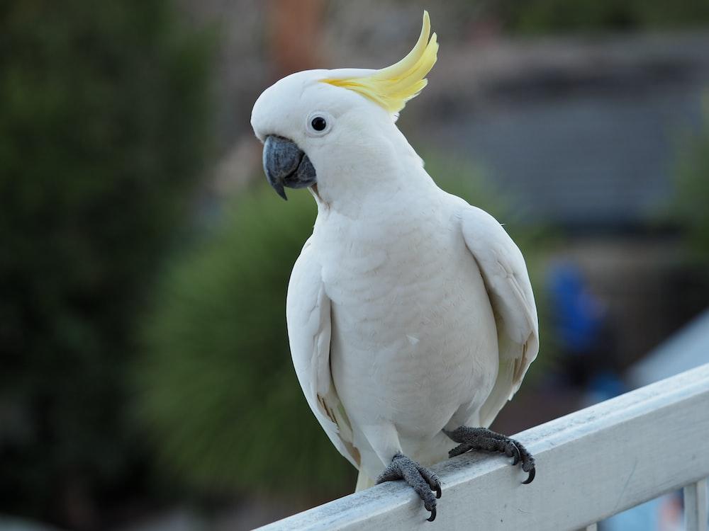 white bird on black metal bar