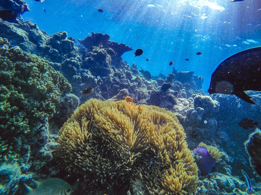 brown coral reef in aquarium