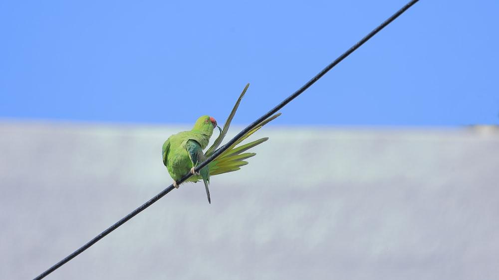green bird on black wire