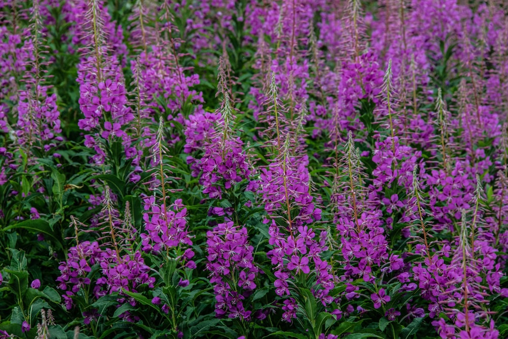 purple flowers in the forest during daytime