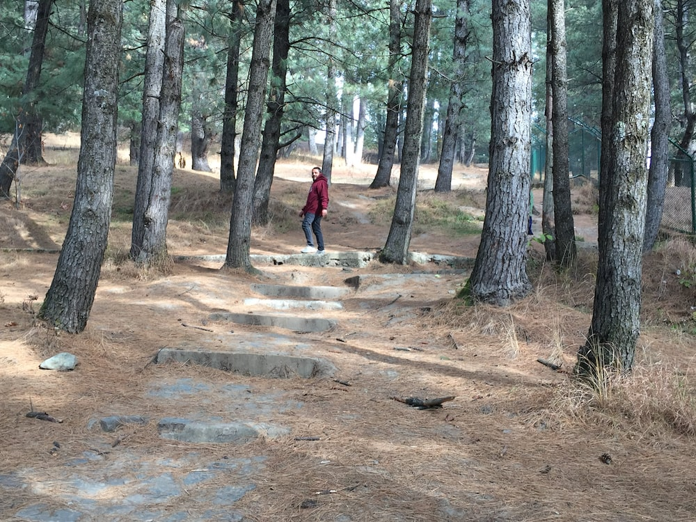 man in red jacket walking on forest during daytime