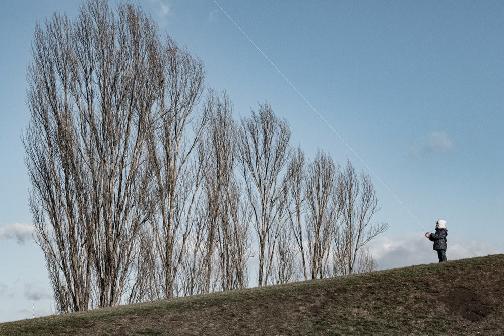 leafless trees on green grass field under blue sky during daytime