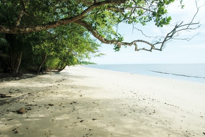 green tree on white sand beach during daytime gabon zoom background