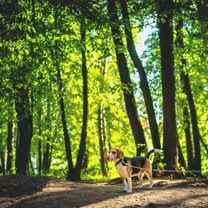 white and brown short coated dog on forest during daytime