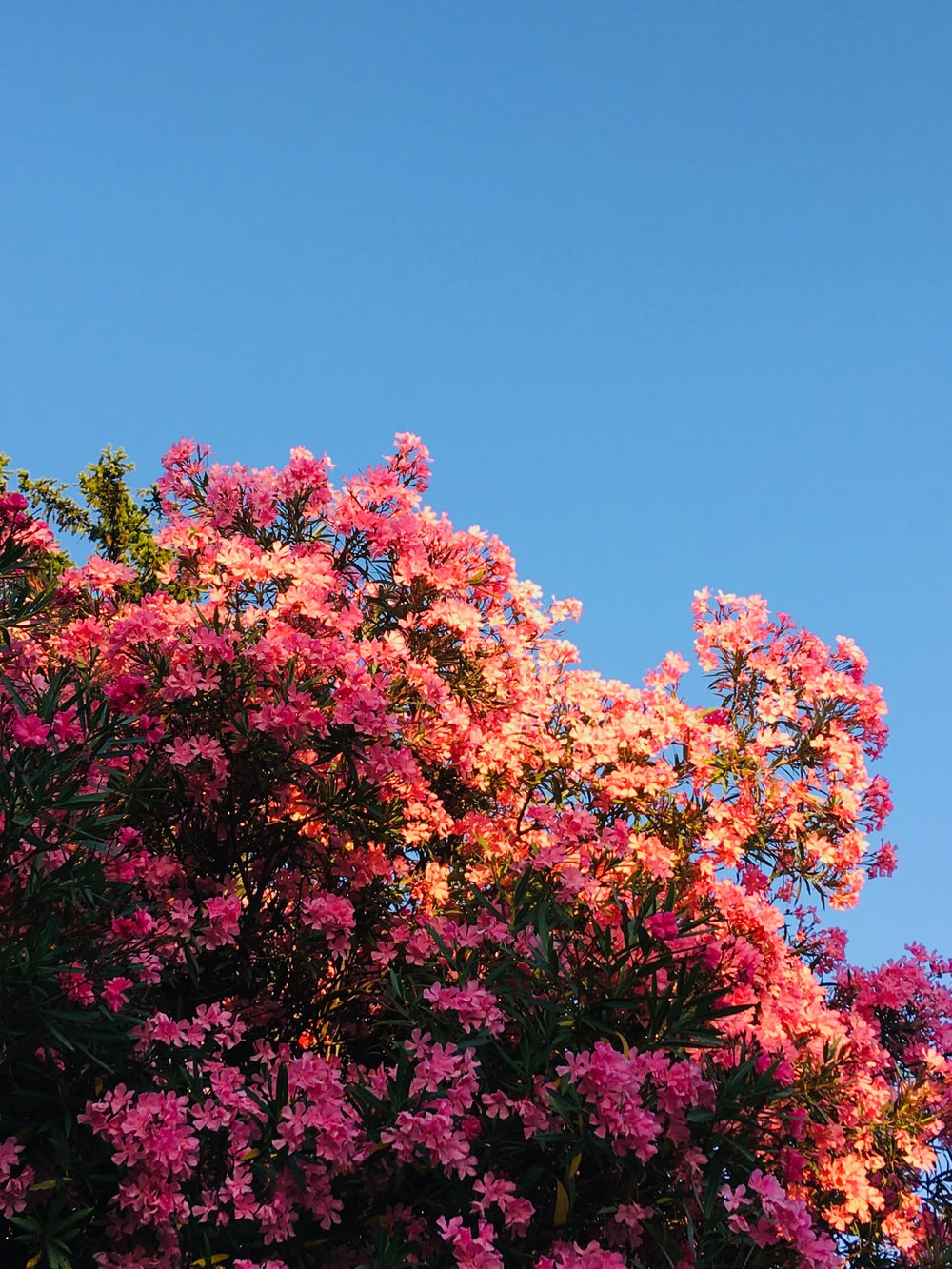 pink and red flowers under blue sky during daytime