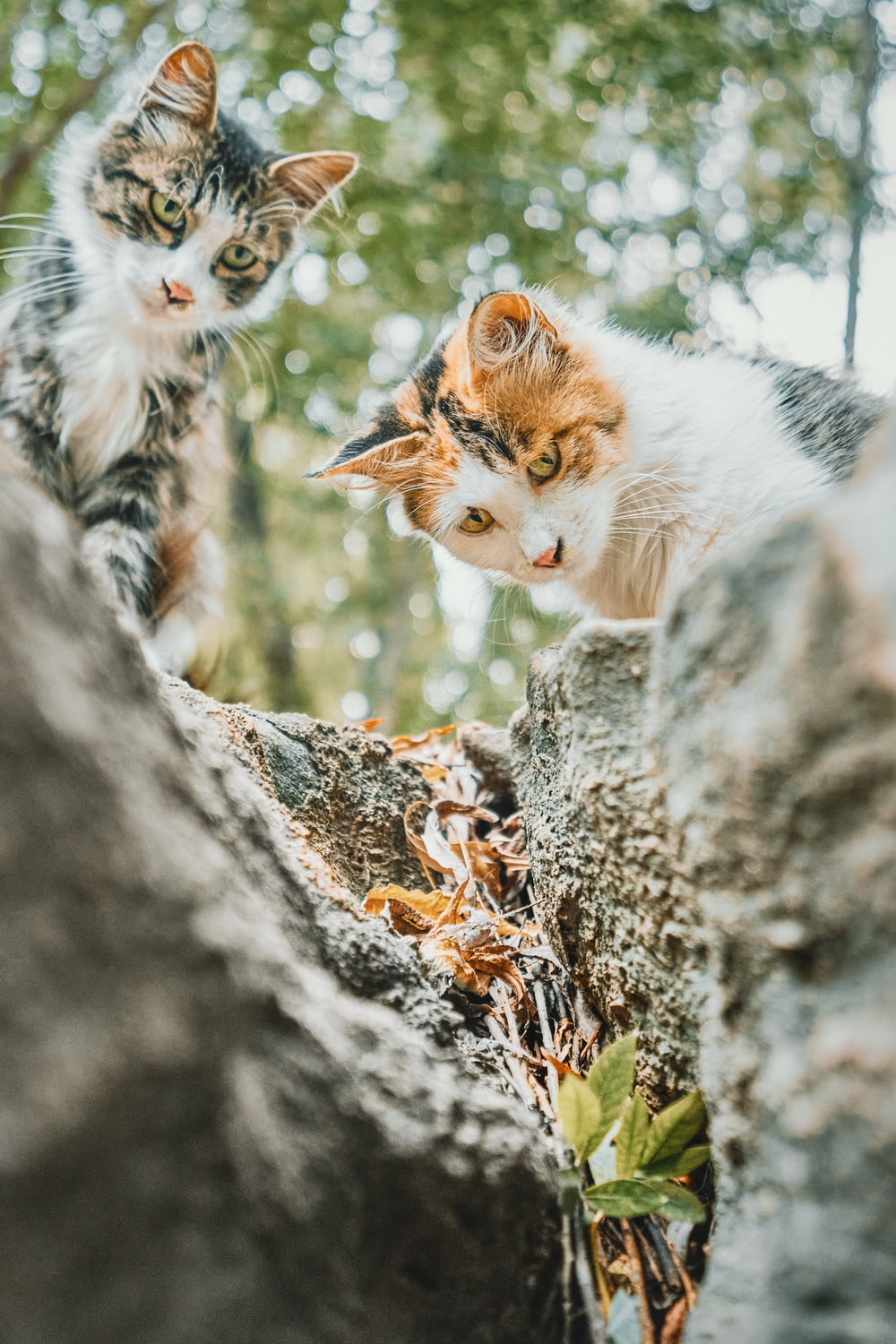 white and orange cat on brown rock