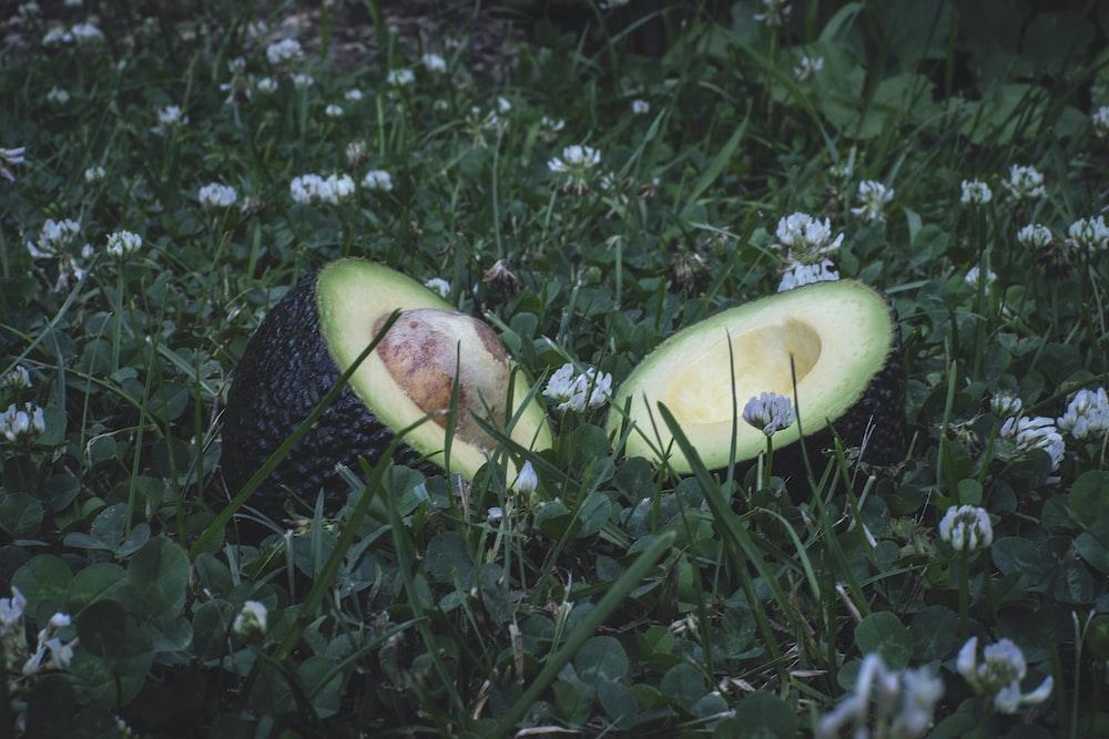 sliced apple fruit on green grass