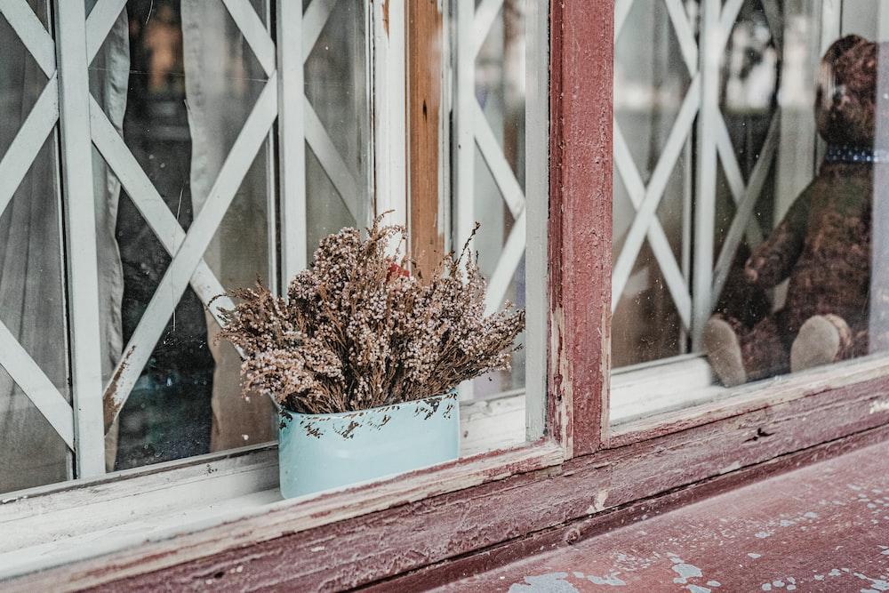 brown plant in blue pot beside window