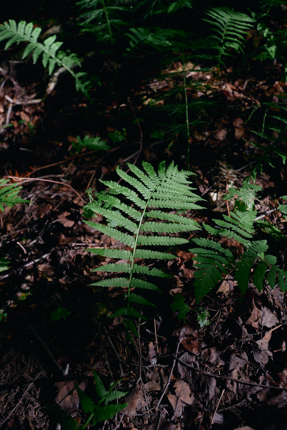 green fern plant on ground