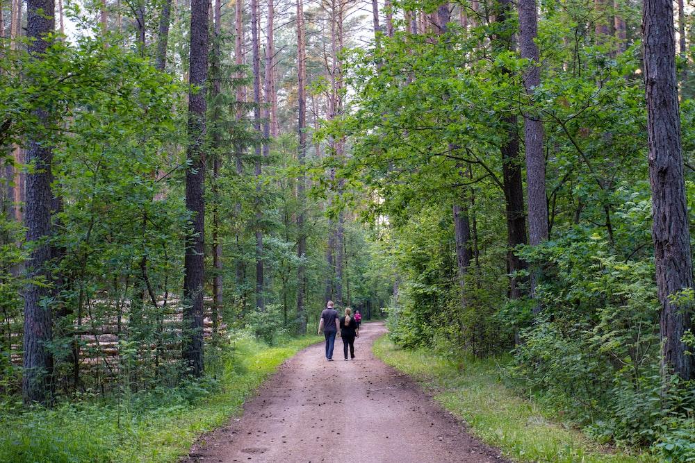 people walking on pathway between green trees during daytime