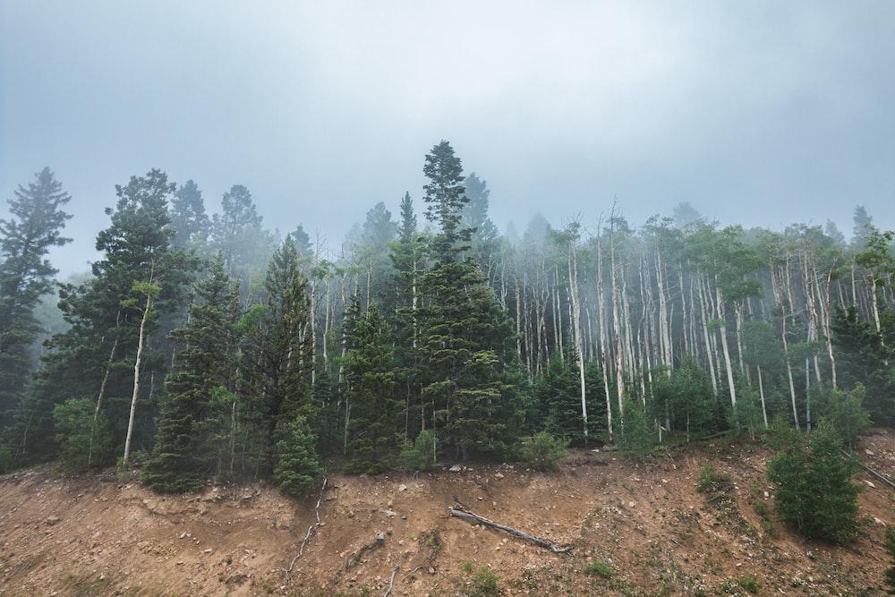 green trees on brown soil under white sky during daytime