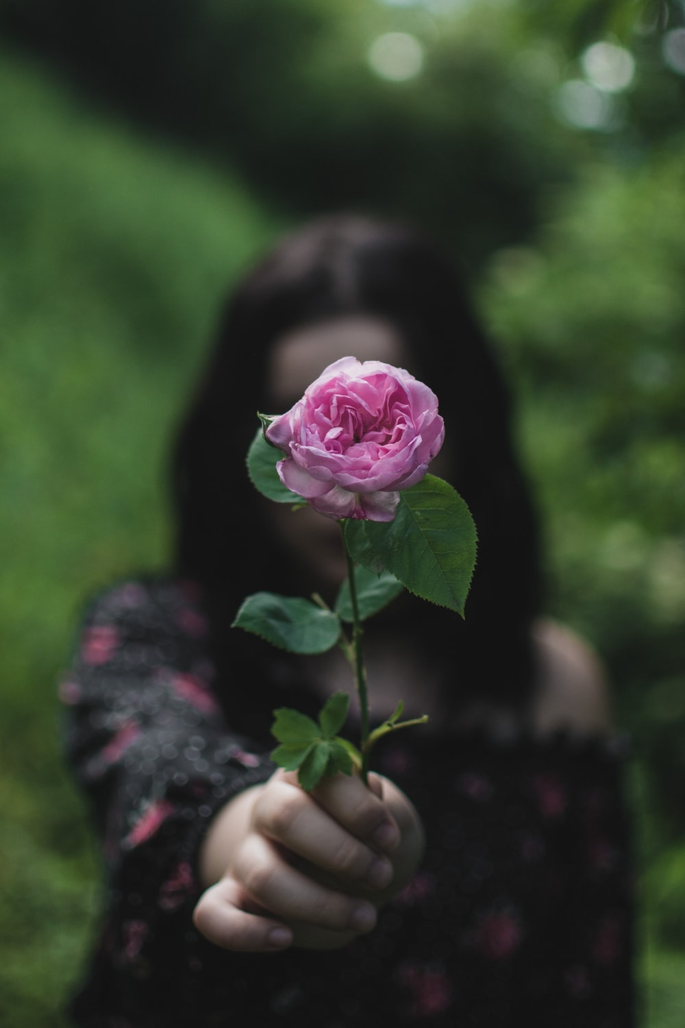 person holding pink rose during daytime