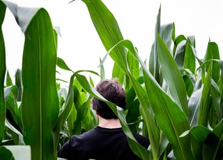man in black long sleeve shirt standing beside corn plant during daytime