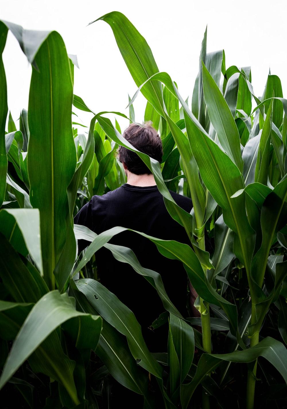 man in black long sleeve shirt standing beside corn plant during daytime