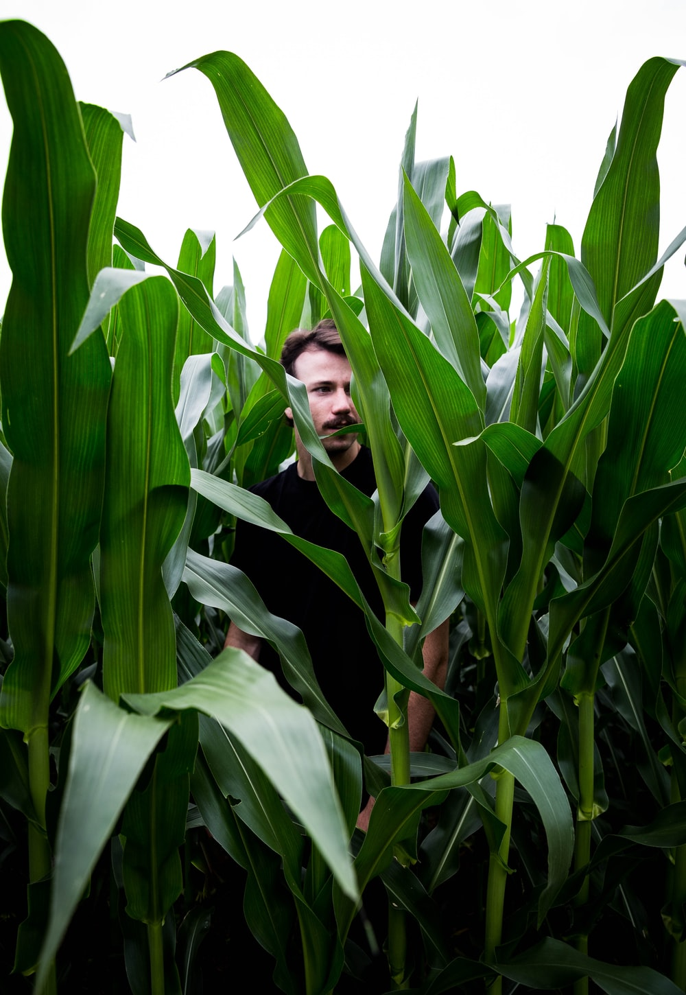 woman in black long sleeve shirt standing beside corn plant during daytime