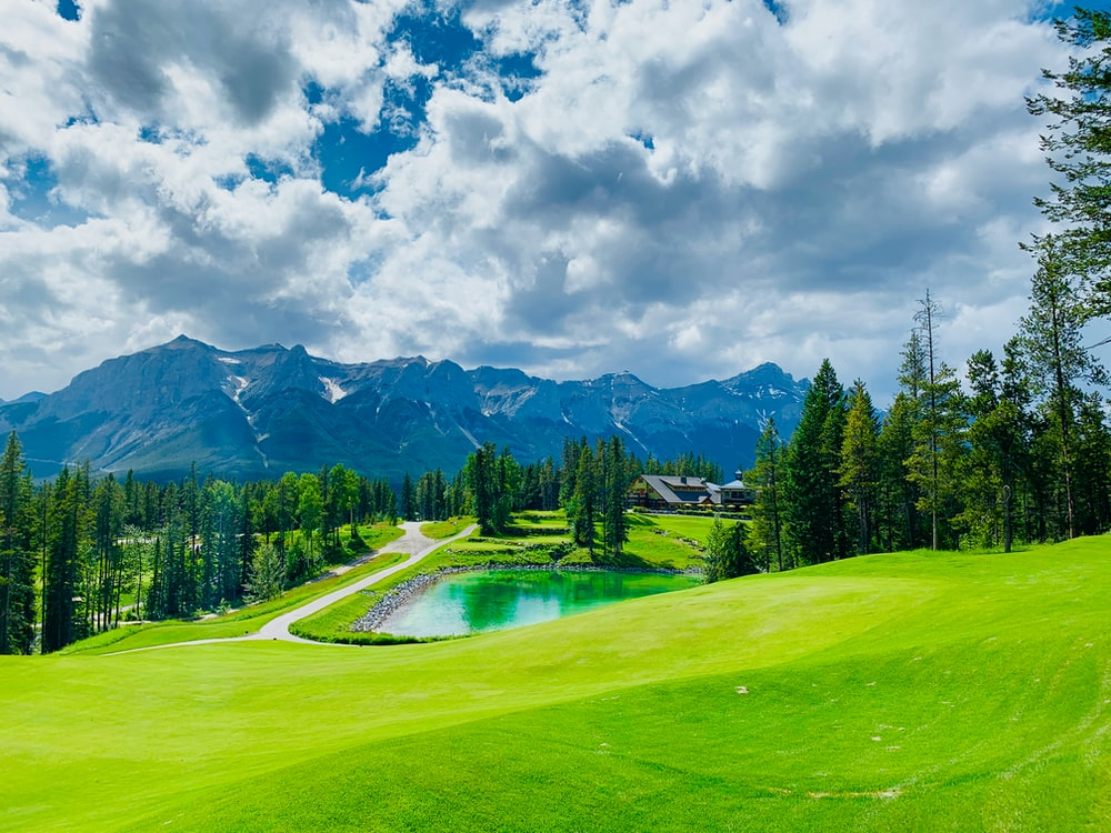 green pine trees on green grass field under white clouds and blue sky during daytime