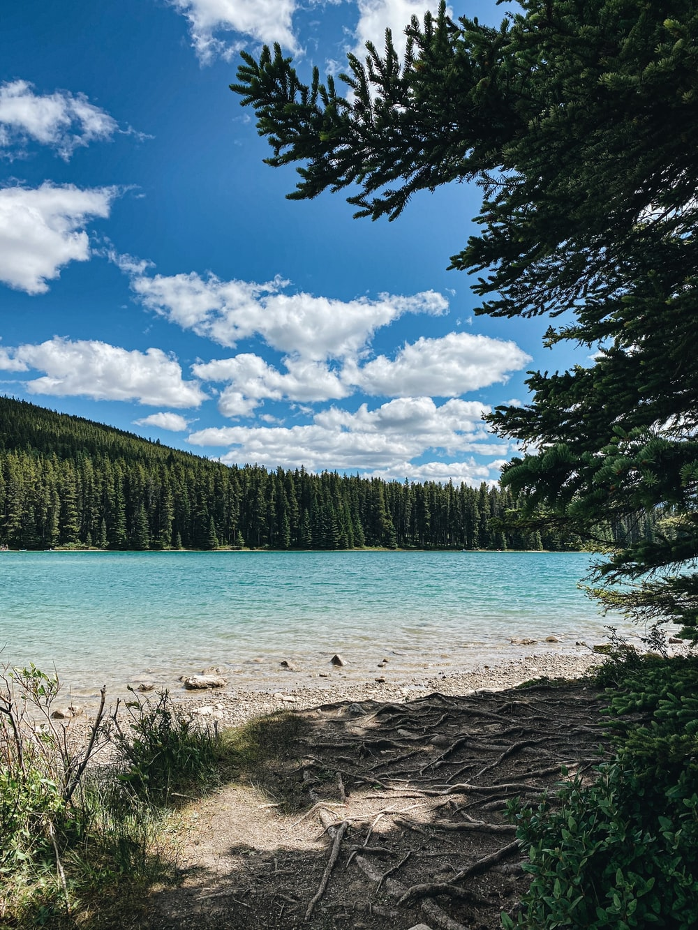 green pine trees near body of water under blue sky and white clouds during daytime