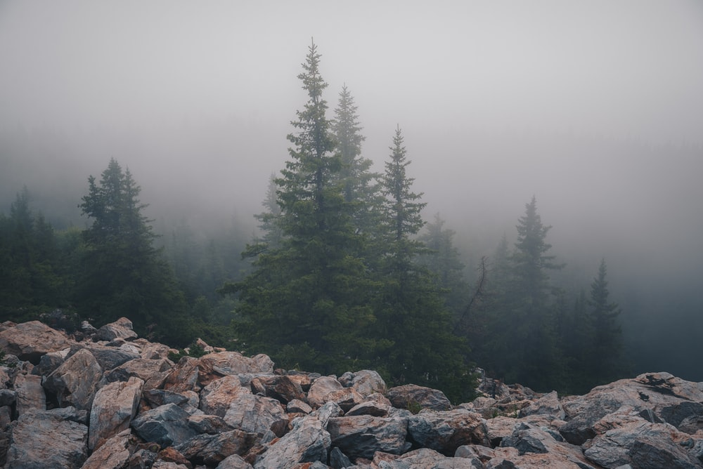 green pine trees on rocky ground