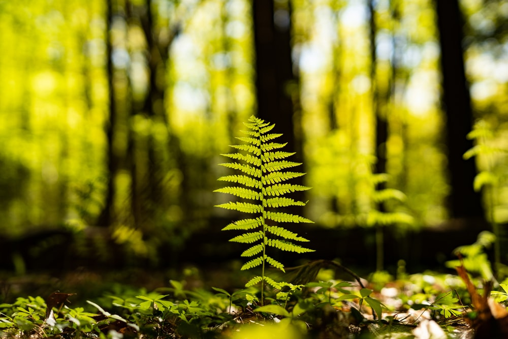 green fern plant in forest during daytime