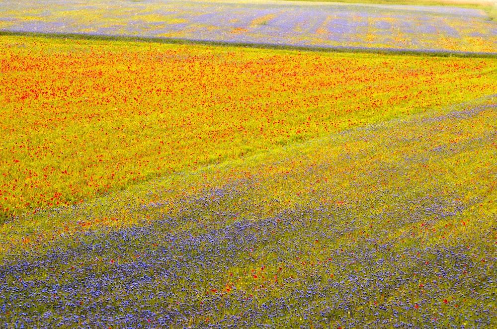 brown field under sunny sky