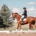 étriers équitation