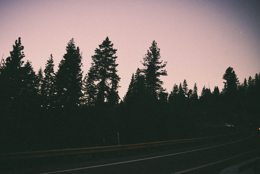 black asphalt road between green trees during night time