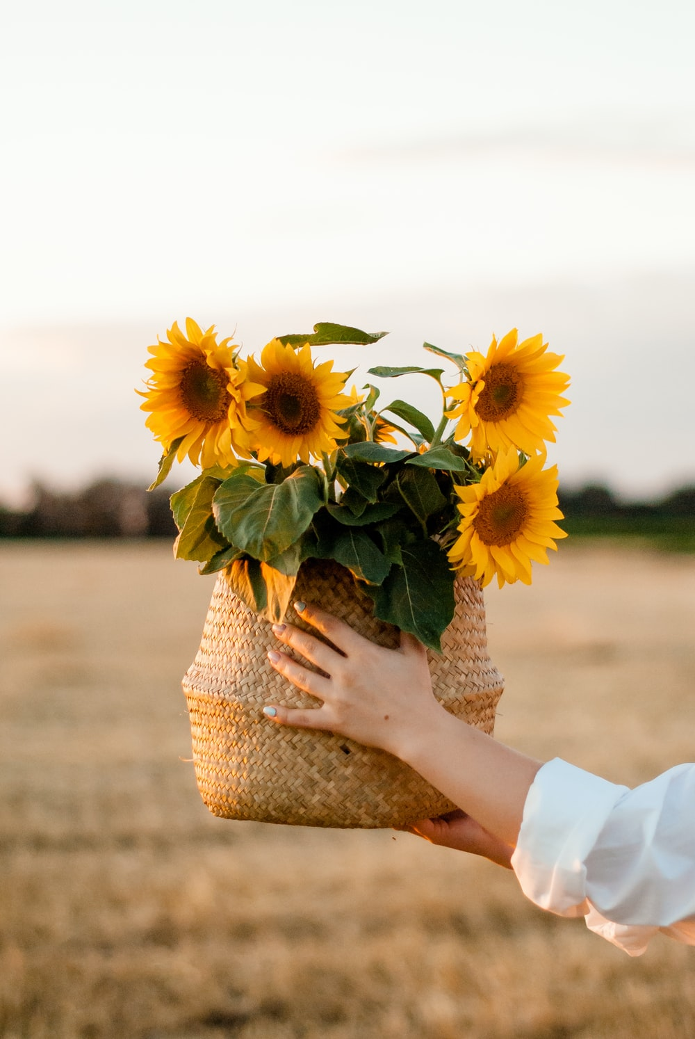 person holding sunflower bouquet during daytime