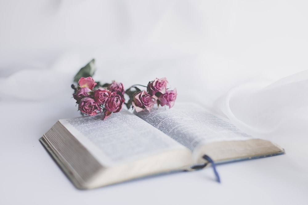 pink roses on book page