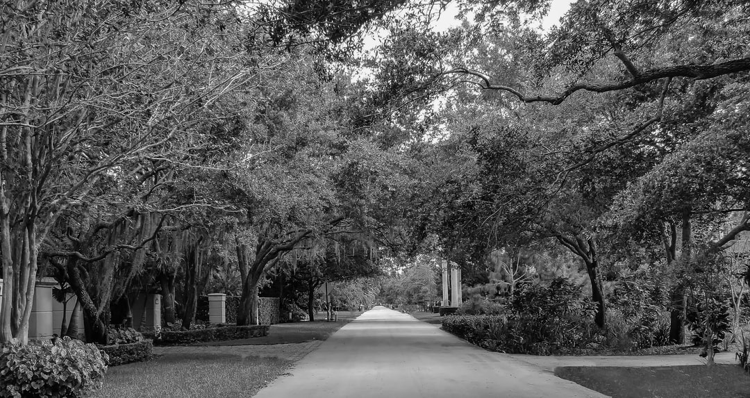 Black and White tree covered street in residential neighborhood South Florida.